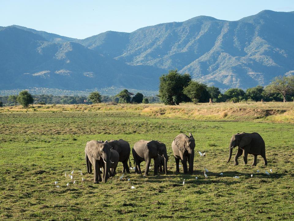 Elefant mit der Steigung bildet eine atemberaubende Kulisse