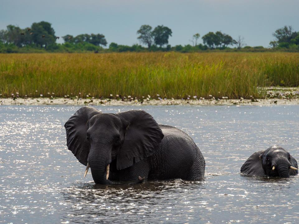 Elefant überqueren langsam die Wasserstraßen