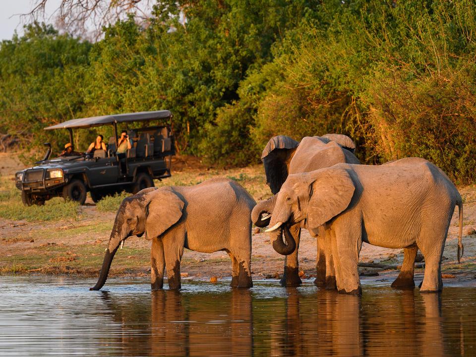 Der Linyanti ist bekannt für seine riesige Population von Elefanten