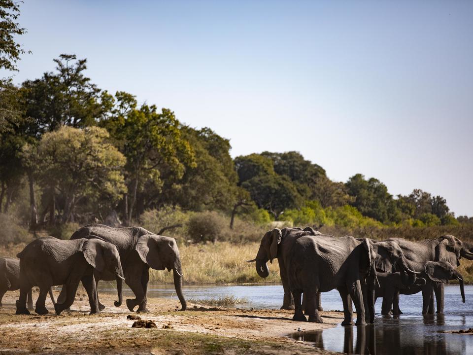 Elefant versammeln sich zu trinken und zu baden