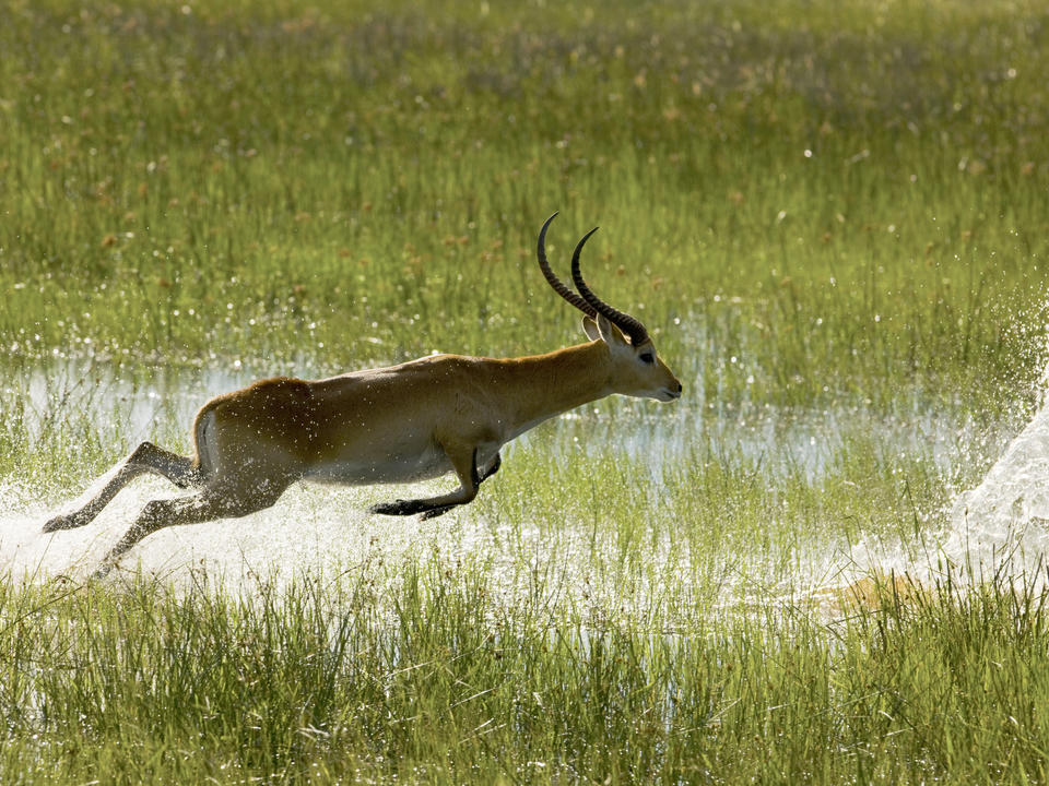 Bounding Through the Marshlands