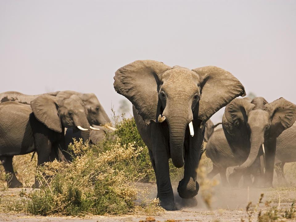 Selinda Reserve Elefanten
