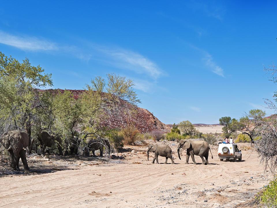 Auf Pirschfahrt zu den seltenen Wüstenelefanten