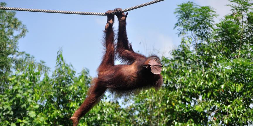 Destinations - Borneo Photo Safari