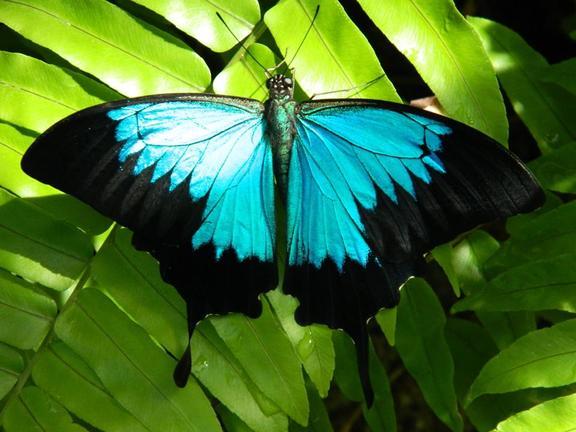 Australian Butterfly Sanctuary