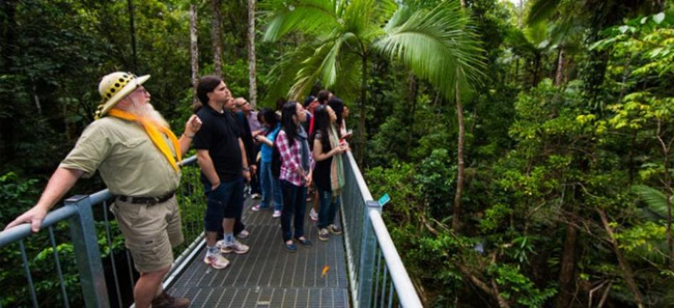 DiscoverTheDaintree