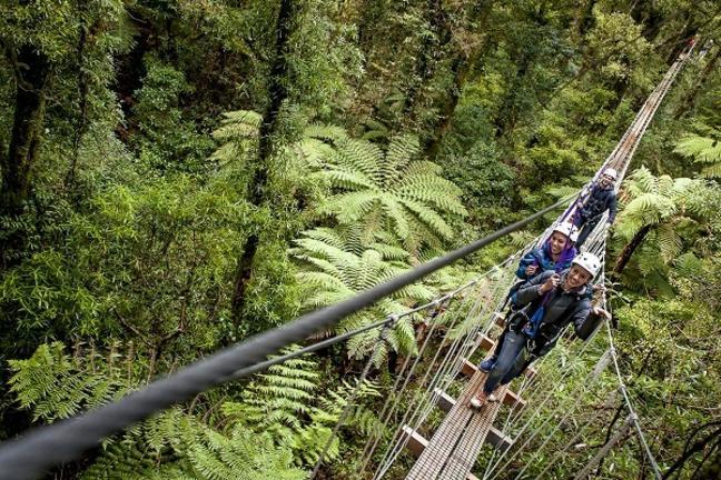 RotoruaCanopyTours