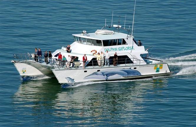 AucklandWhale&DolphinSafari