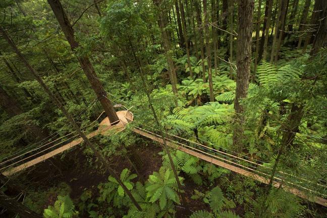 RedwoodsTreewalk