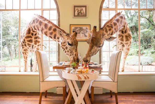 accommodation kenya giraffe manor sala s camp