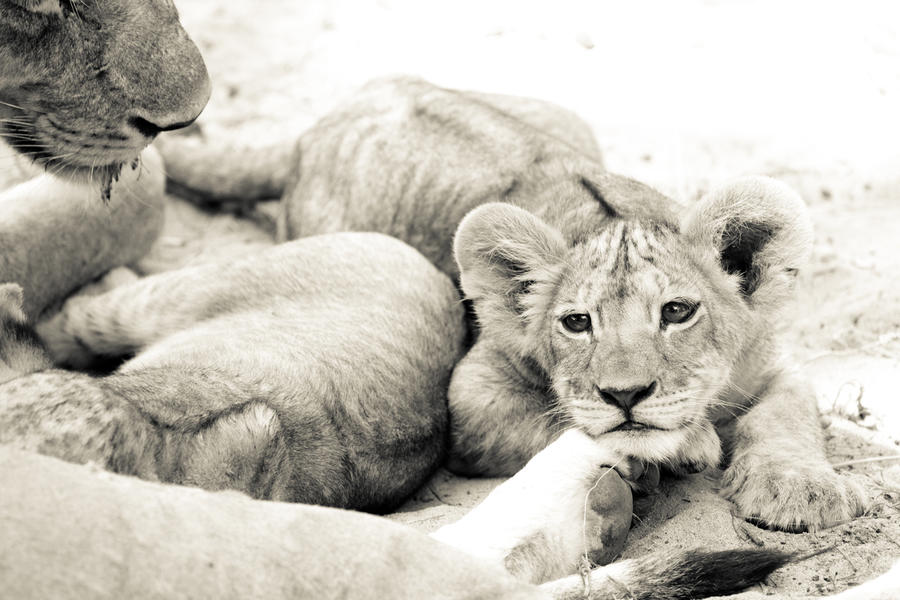 Accommodation - 8 Days Safari Collection