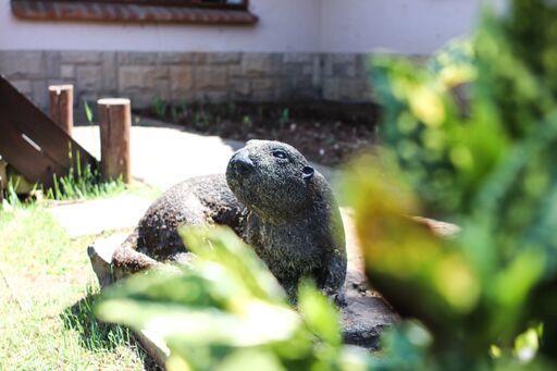 Otters Den