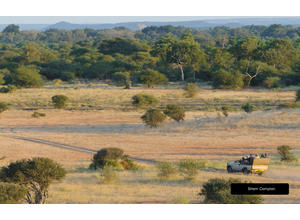 Game drives at Mashatu Game Reserve