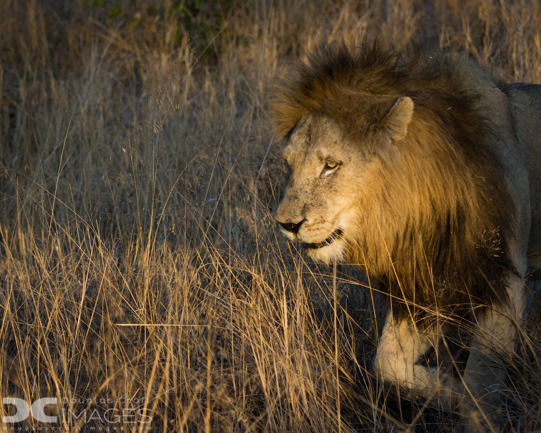 African lion safari prices / Breakfast in bismarck nd
