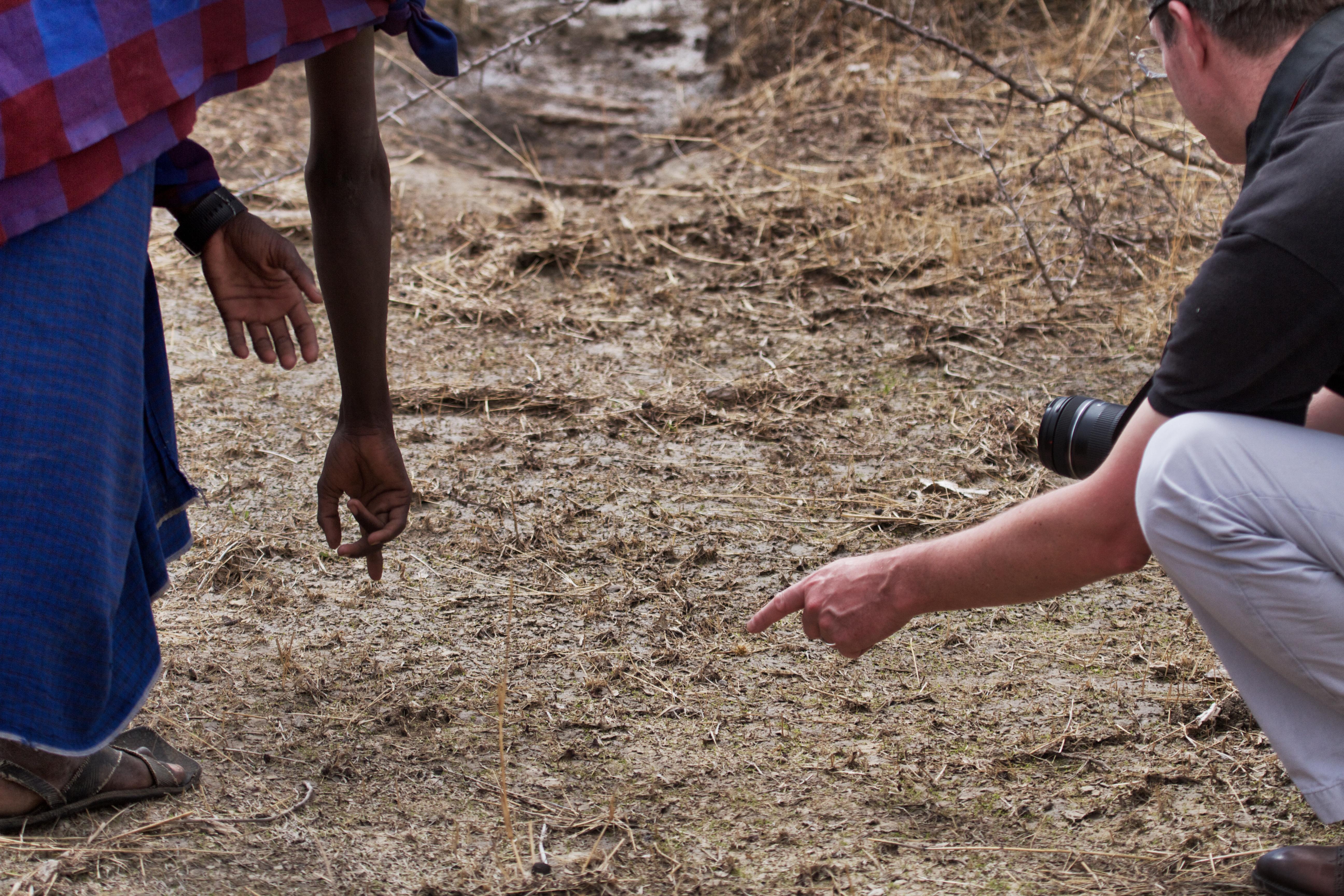 Messenger Dog Training World War I besides Stock Photography Plant Nursery Orchids Image19222 as well Details also Garmin Fenix 5 in addition Petsafe pdt20 de luxe teletac elektronische trainingshalsband met display voor honden  vanaf 18kg 900mtr afstandstrainer i35 730 0. on tracking dog