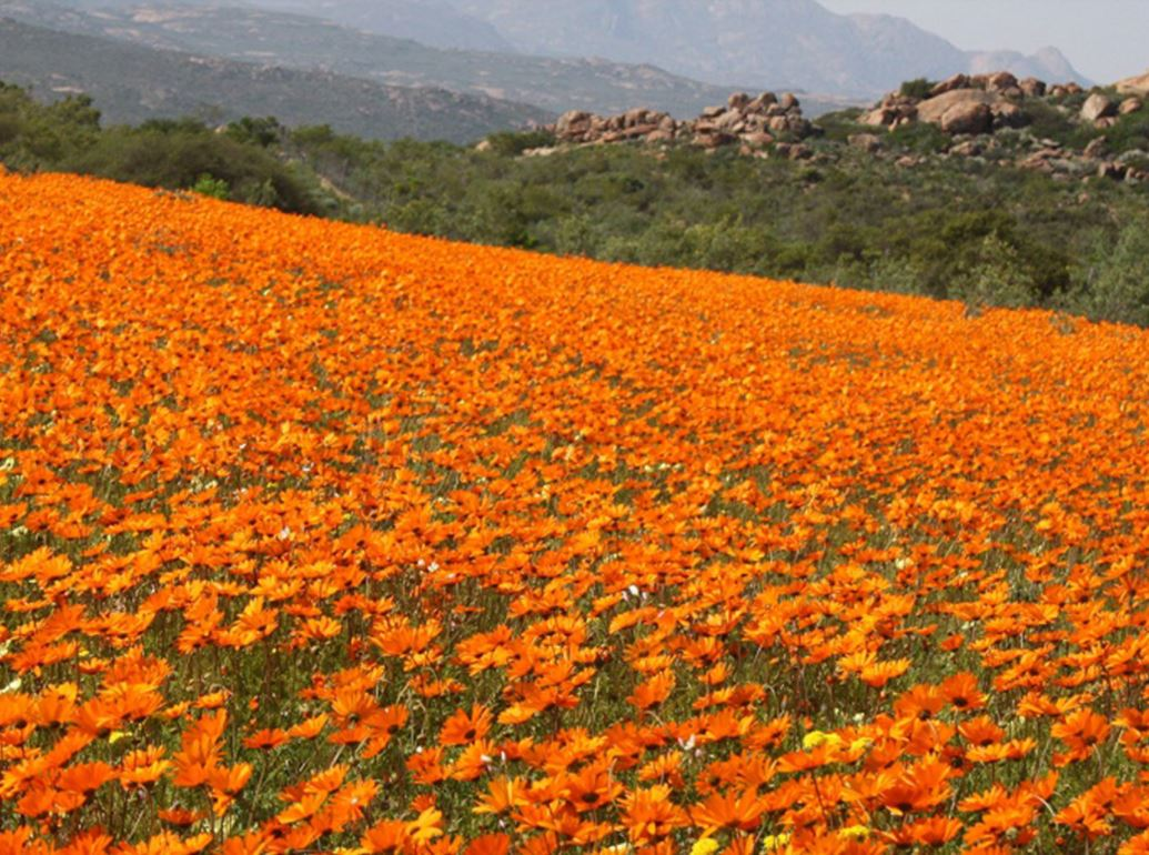 Overview 4 day Namaqua Flower Camp